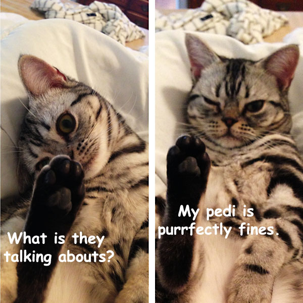 Cat Pedicure: a must! [funny photo]