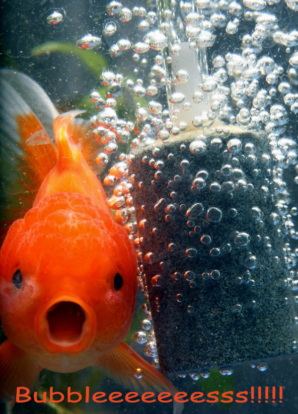 Aquariums are fun or not funny fish furry talk for Pet koi fish tank