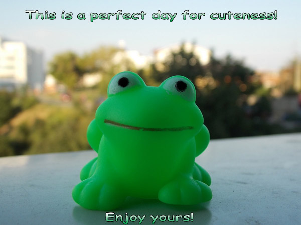 Happy Cuteness Day! [green frog photo]