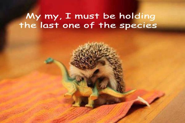 Mr. Spikle and the Dinosaur [hedgehog photography]