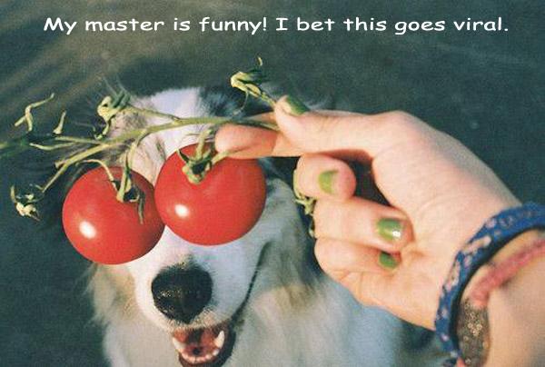 Funny Tomato Dog [cute photo]