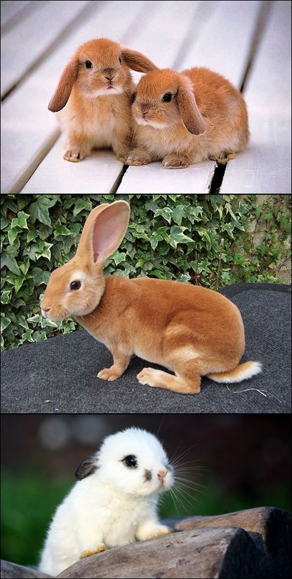 Because We All Love Bunnies [adorable photos]