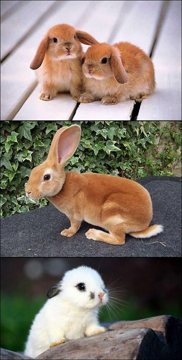 Because We All Love Bunnies [adorable photos]