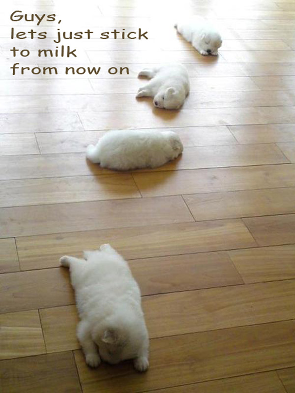 When Puppies Party [adorable photo]