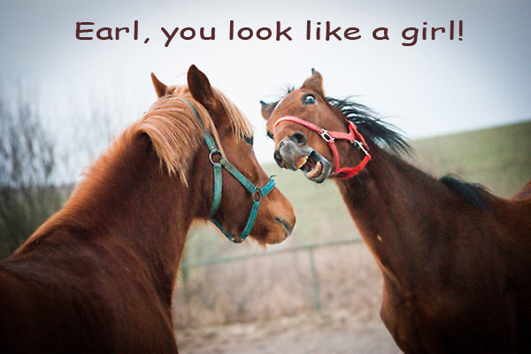 First Impression after a Look Change [funny horses]