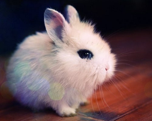 Bunny Skipped Easter [cute photo]