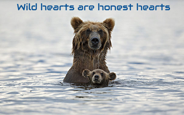 Wild Hearts [mother bear and cub]