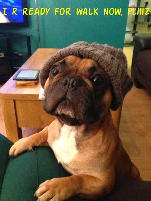 Cute French Bulldog Puppy [photo]