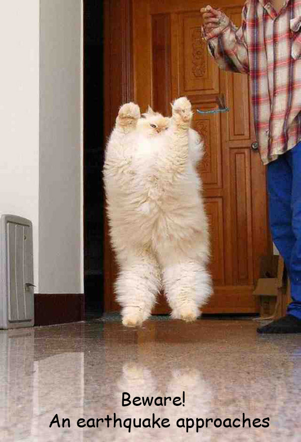 Fluffies Fluff! [cat jumping photo]