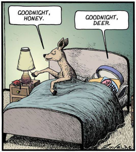 Nighty Night [creative humor]