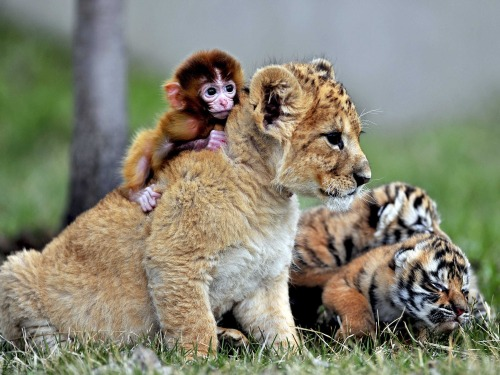 Baby Animals Play [cutest photo]