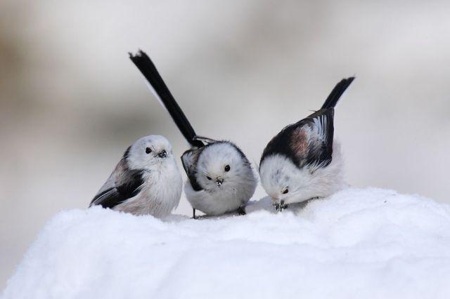 Birds Are Amazing [photography]
