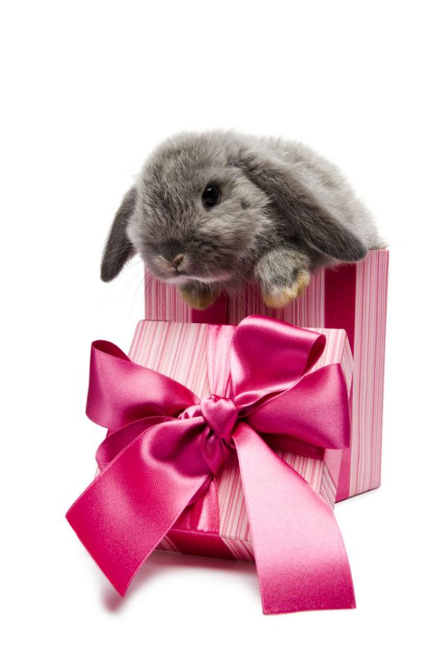 Happy Birthday Bunnies [cute photo-cards]