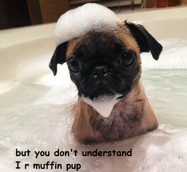 Muffin Pup [puppy taking a bath]