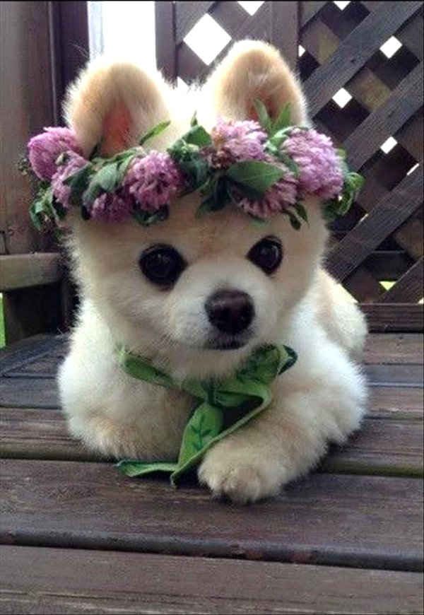 And the Winners Areeeeee.........[cutest puppies online photos]8