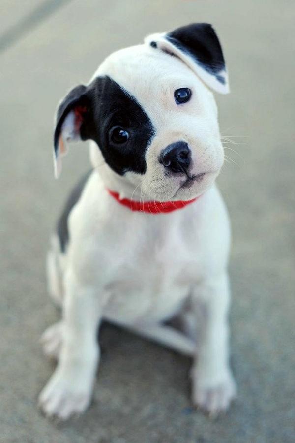 doggy8