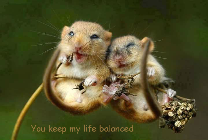 Love on a Branch [cute tiny mice photo]