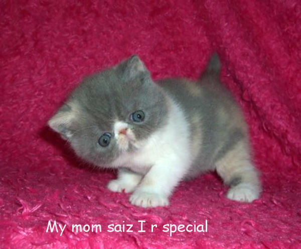 "Very ""Special"" Kitten [cute photo]"