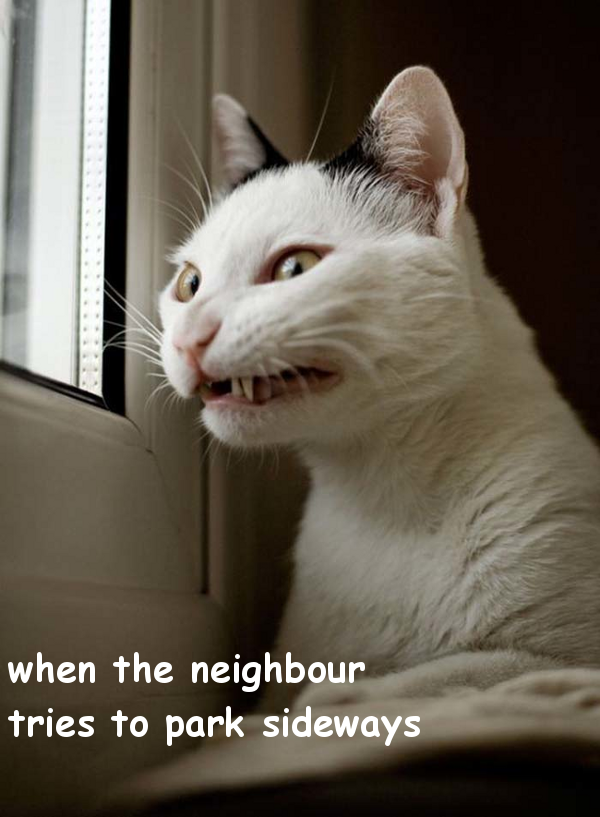 When the Neighbour Parks [funny photo]