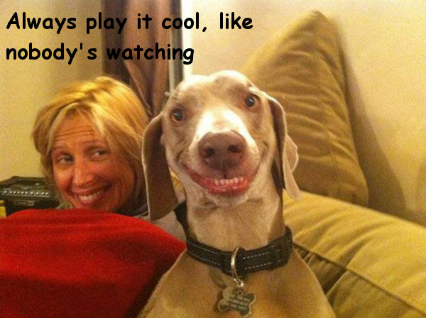 Playing It Cool [funny dog face]