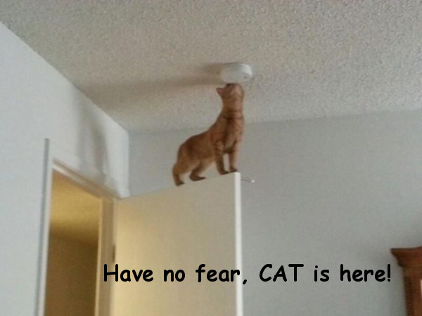 I Fix It! [funny cat photo]