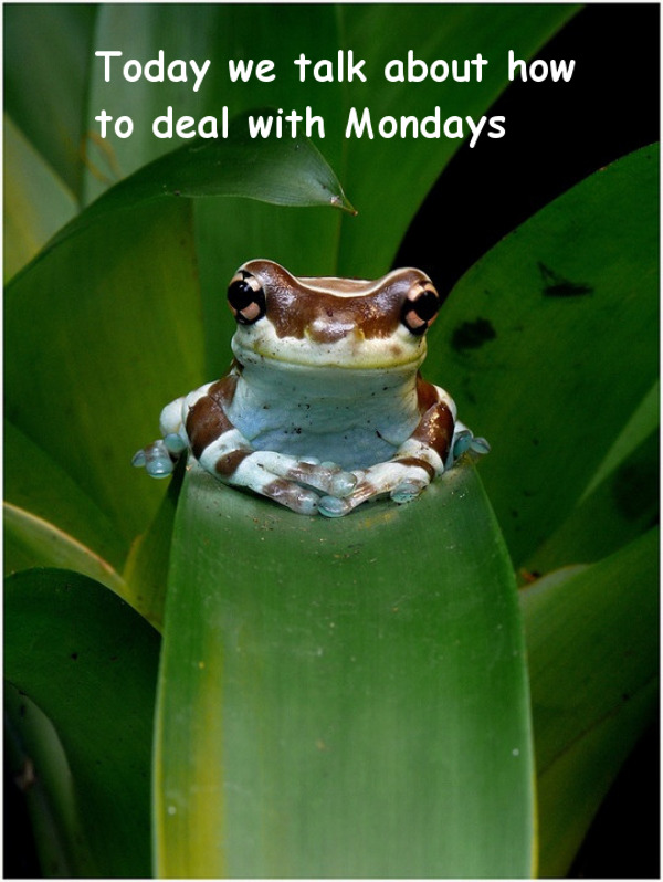 Mondays - Therapy Discussion [tiny frog picture]