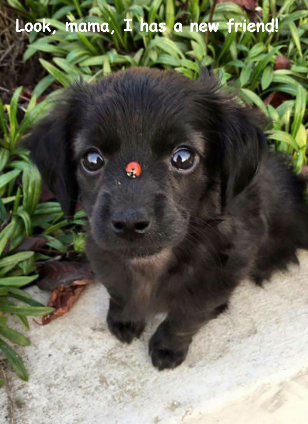 Little Pup and Little Ladybug [cute photo]