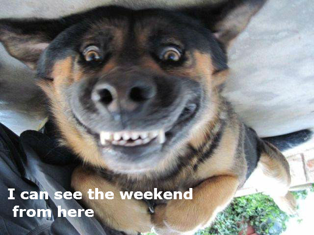 The Weekend Happiness [funny German shepherd]