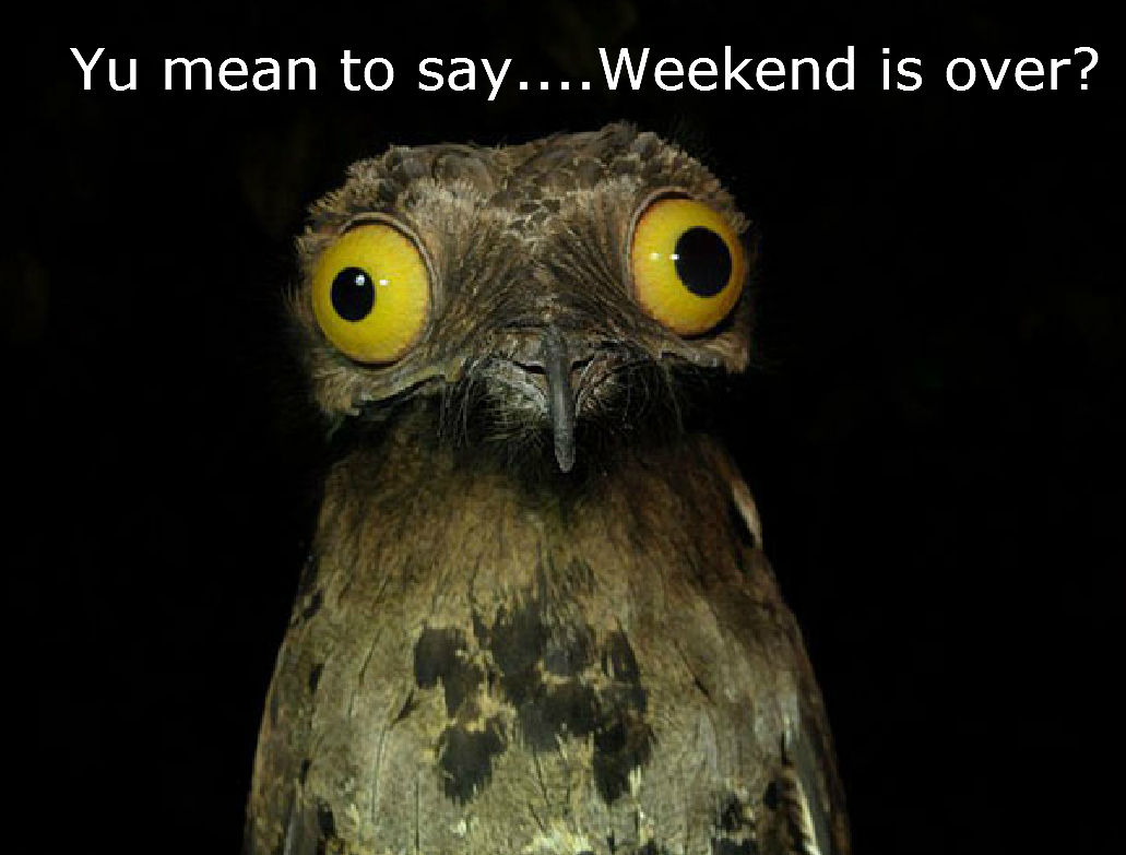 Weekend is Over [shocked owl]