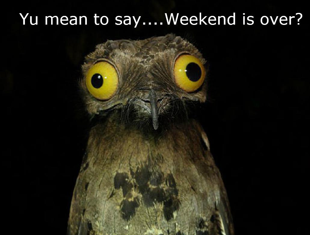 Weekend is Over [shocked owl]
