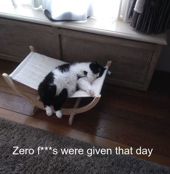 That Day...[funny lazy cat]