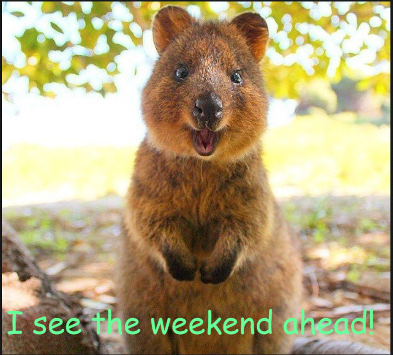 Oh My Gosh Quokka [fun weekend photo]