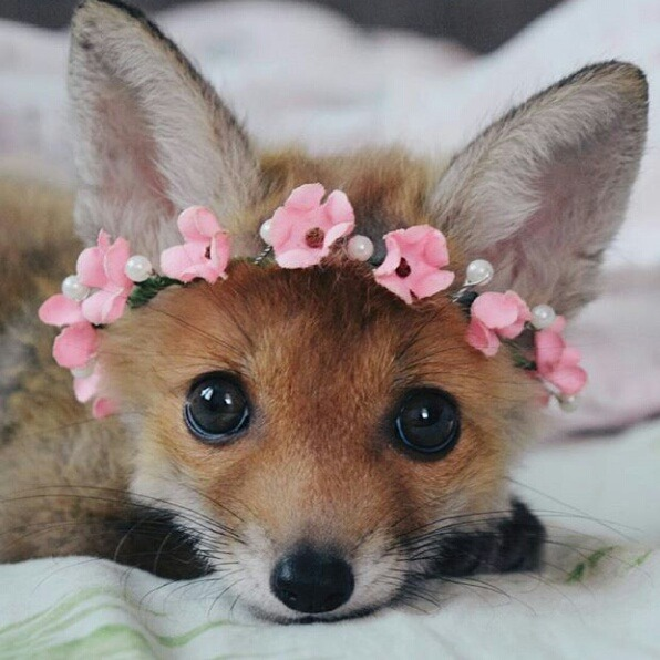 Just This Pretty Baby Fox [cute photo]