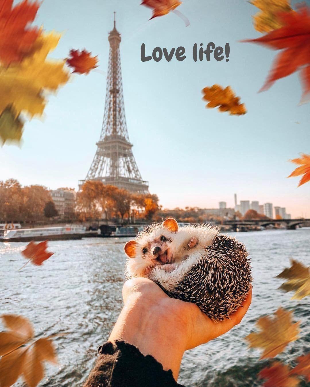 Just This Hedgehog in Paris [super cute photo]