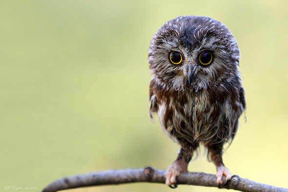 A Little Cute Owl