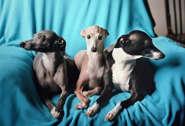 The Three Amigos