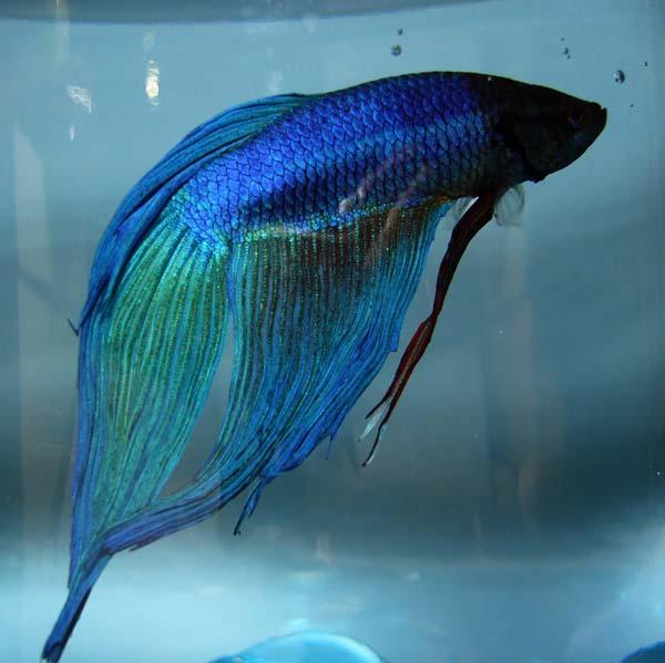Blue Teruhiko
