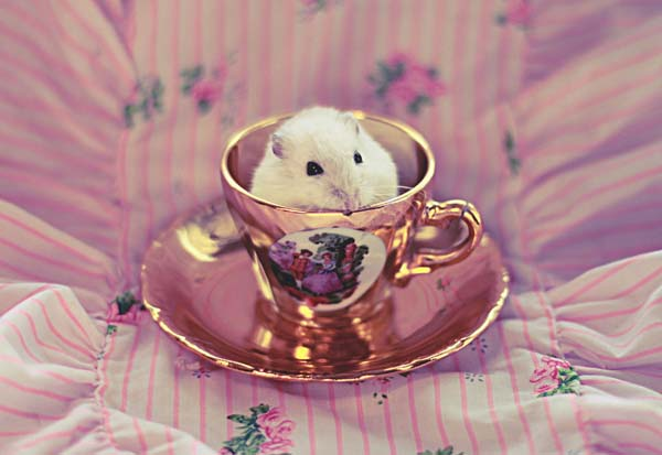 Pink Hamster