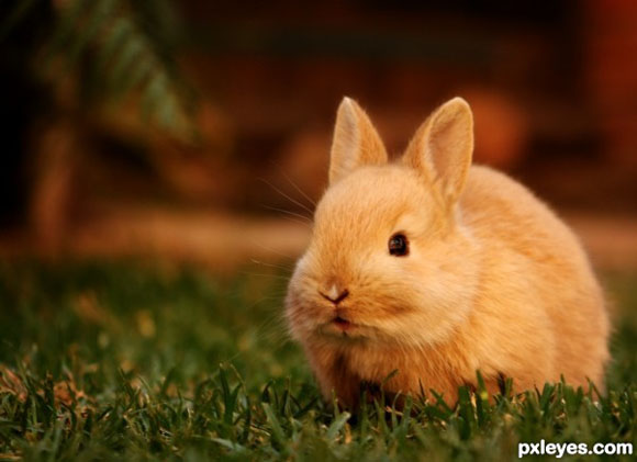 Basil - A Darling Bunny