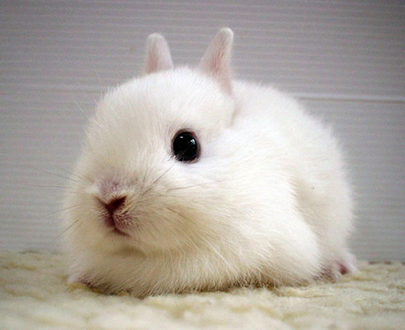 White and Cute Babby Bunny