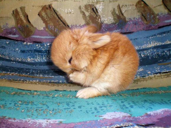 A Happy Bunny is a Clean Bunny
