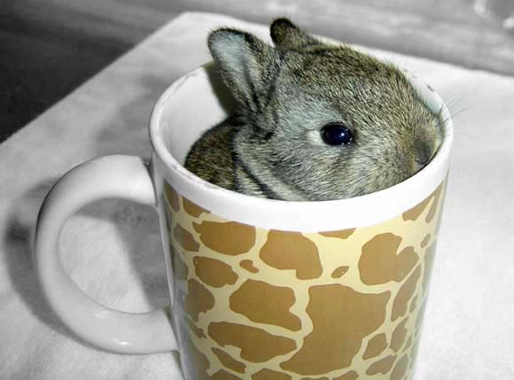 Have a Cup of Cuteness