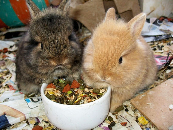 Baby Bunnies Eating