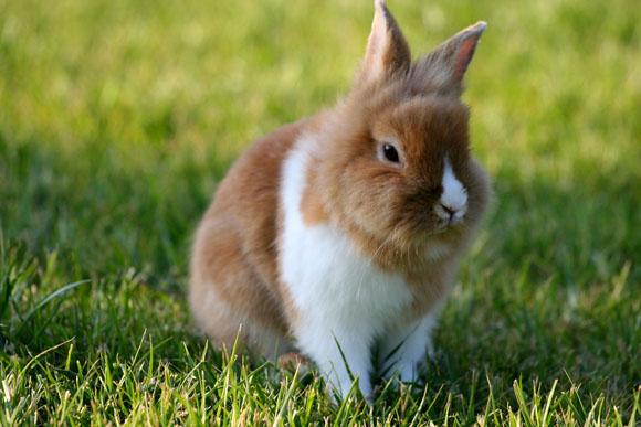 Rabbit in a Farm