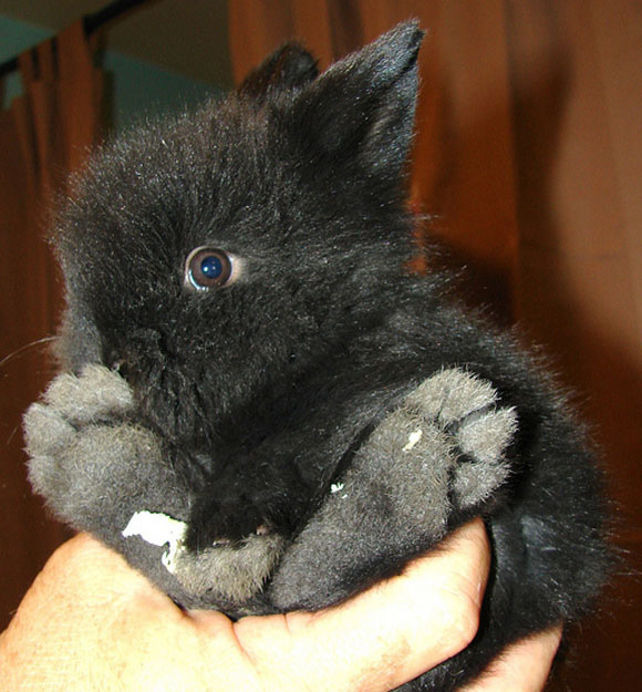 One Month Old Baby Bunny