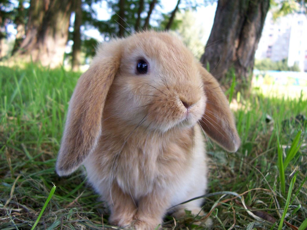 Confused Bunny