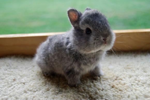 A Darling Baby Bunny