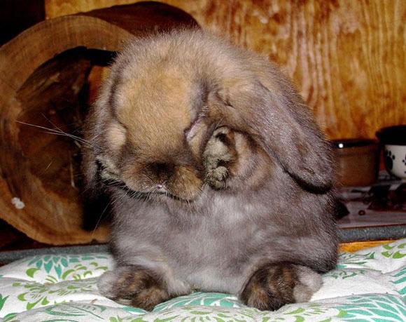 Awwww Bunny