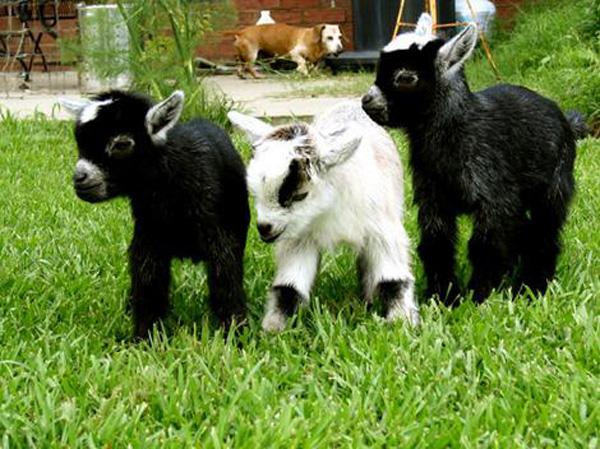 A Cute Trio