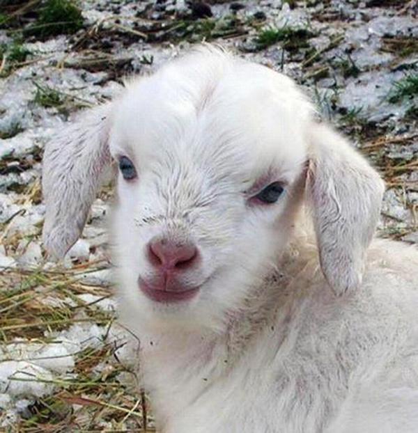 Snow White Baby Gota